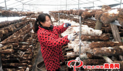 Mushroom cultivation promotes farmers to generate revenues