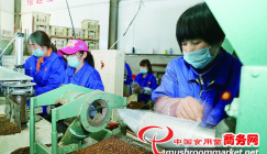 The production and process of mushroom stick assists poverty removal