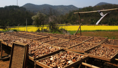 Trial Shiitake cultivation obtained its success in first-grade poor village