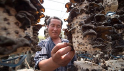 Hebei Province: Develop characteristic mushroom industry and promote precise poverty removal