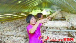 Shiitake cultivation propels farmers to end poverty and grow rich