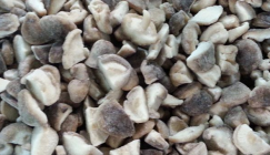 Yilong Corp plans to build mushroom processing line holding 150 million CNY of annual output value