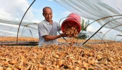 Growing mushrooms to boost revenues