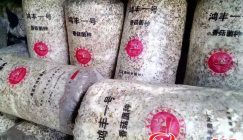 Mushroom strains produced from the company gain growers' popularity