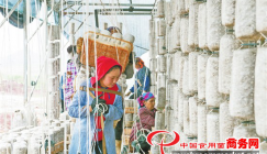 Black fungus cultivation supports poverty alleviation
