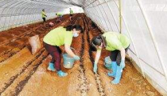 Morel cultivation levers up poverty alleviation
