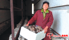 Pleurotus cornucopiae cultivated in vacant drying room indicate infinite affluence