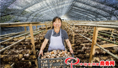 Mushroom industry hints a thriving future