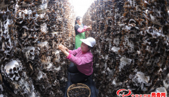 It is the world of Black fungus in Zuoshui, Shanxi Province of China
