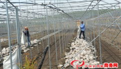 Black fungus cultivation becomes the bright industry that indicates handsome incomes
