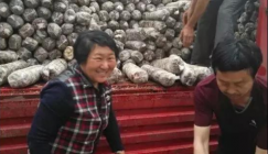 Trial summer mushroom production was launched