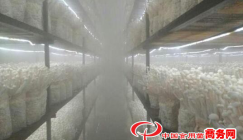 Fujian Province: Seafood mushroom production evolves into a FLOURISHING INDUSTRY