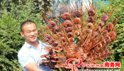 Reishi mushroom cultivation yields a rosy tomorrow