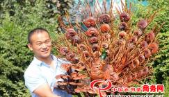 Reishi mushroom cultivation yields a rosy tomorrow
