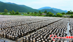 In 2018, gross output on Black fungus came to 450,000 sticks in this town