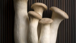 Zhejiang Hangzhou Market: Analysis of Mushroom Price