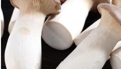 Guangdong Haijixing Market: Analysis of Mushroom Price