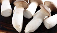Yunnan Guanshang Market: Analysis of Mushroom Price